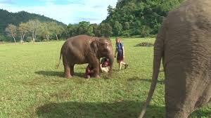 girls play with baby elephant jukin media