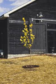 Golden Color Shades Black Barn Winery U0026 Event Hall Spring Feels