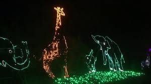 Zoo Lights Az by Zoo Lights At The Phoenix Zoo Youtube