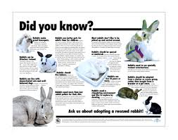 rabbit poster did you poster for shelters and rescue groups house rabbit