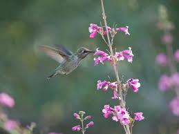 Hummingbird Plant Make A Hummingbird Theater Diy Network Blog Made Remade Diy