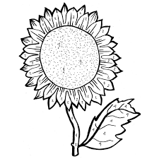 sunflower coloring pages with colored picture example