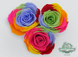 Different Color Roses Rainbow
