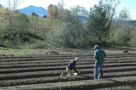 thanksgiving in vermont organic garlic organic turkey