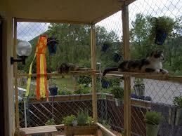 katzenschutz balkon katzen suchen ein zuhause katzen aus reutlingen katzen aus