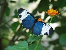 12 sighted and appealing butterfly species