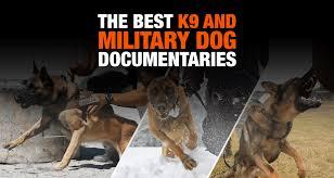 belgian sheepdog rescue trust facebook 5 best k9 u0026 military dog documentaries on training u0026 breeding