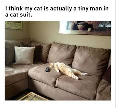 Cat Suit Meme - 10 fresh cat memes 9 the job in venterinary clinic is awesome