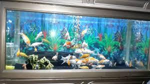 ikan koi dalam aquarium youtube