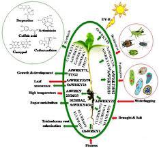 frontiers wrky transcription factors molecular regulation and