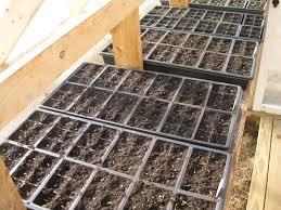 greenhouse tom u0027s gardens