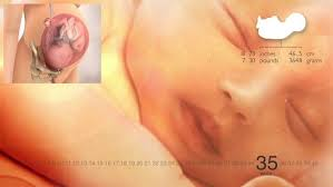 light cring 7 weeks pregnant 35 weeks pregnant fetus development cring and signs of labor at