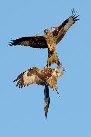 wild scotland wildlife and adventure tourism birds birds of