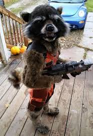 pet halloween costumes uk 21 of the best funniest and most inventive costumes from