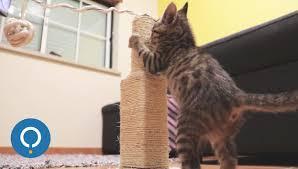 Modern Cat Scratching Post Diy Cat Scratching Post Youtube