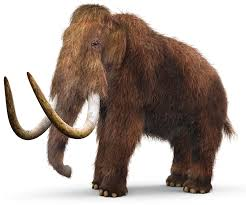 woolly mammoth facts mammoths live dk
