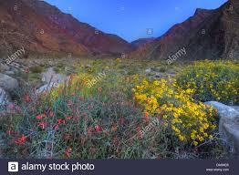 usa united states america california borrego springs borrego