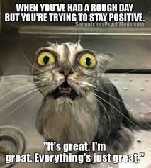 Joke Memes - wet cat meme joke memes quotesbae