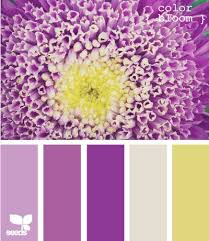 59 best purple and yellow images on pinterest colors yellow