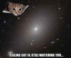 Ceiling Cat Meme - ceiling cat meme 28 images i was only gone for 2 days ar15 com