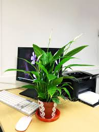 what are the best office plants we investigate