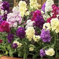 Fragrant Night Blooming Plants - garden design garden design with fragrant flowers that bloom at