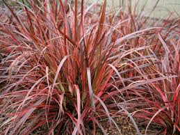 ornamental grasses grasses for landscaping hgtv