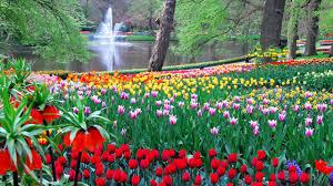 keukenhof flower gardens laidback tours amsterdam keukenhof flower garden day tour