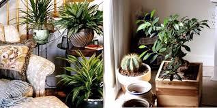 home interior garden amusing interior gardening pic also home interior design ideas