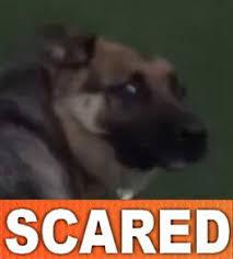 Scared Memes - scared memes