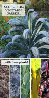 How To Plant Vegetables In A Garden by Design A Decorative Vegetable Garden With A Rainbow Of Colorful