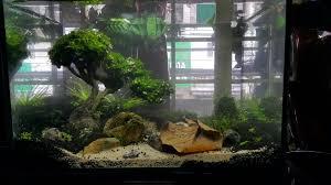 Aquascape Tree Bonsai Driftwood Aquascape Bonsai Driftwood