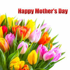 mothers day flowers send tulips flowers for to celebrate s day elsoar
