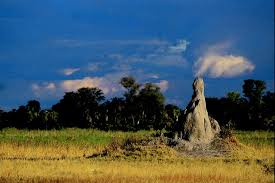 Landscape Mounds Front Yard - how to determine termite mounds in a yard hunker