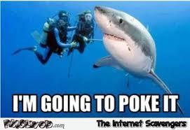 Shark Meme - let me poke the shark funny meme pmslweb