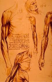 Leonardo Da Vinci Human Anatomy Drawings Leonardo Da Vinci Anatomical Drawings Muscles Arms