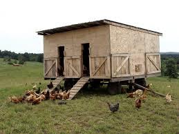 the perfect backyard chicken setup pip magazine australian