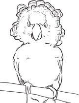 parrots coloring pages 41 best coloring pages images on pinterest coloring books
