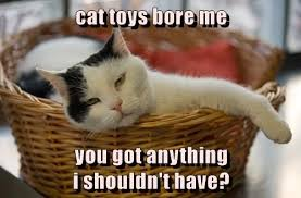 Meme Toys - cat toys bore me justpost virtually entertaining