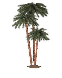 the and palm trees design around world a