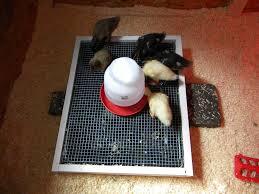 96 best brooder box ideas images on pinterest raising chickens