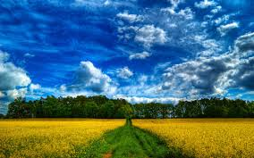 Beautiful Landscapes Field Sky Beautiful Landscapes Landscape Green Fields Hd Hd 16 9