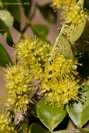 native plants fort myers irc natives for your neighborhood