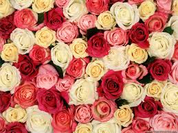 Colorful Roses 29 Roses Backgrounds Wallpapers Images Pictures Design