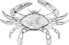 Blue Crab Coloring Page Animals Town Free Blue Crab Color Sheet Crab Coloring Page