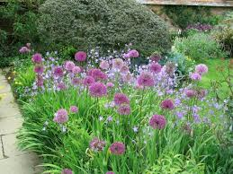 flower plants how do plants grow becoming a gardener step 1