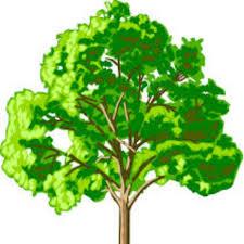 elmwood tree service inc jersey s premier tree service