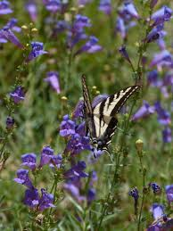 creative butterfly garden california home design great fancy and