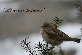 his eye is on the sparrow lies from the mirror