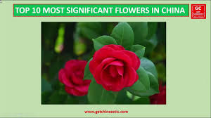 top 10 most popular flowers significant to the chinese culture